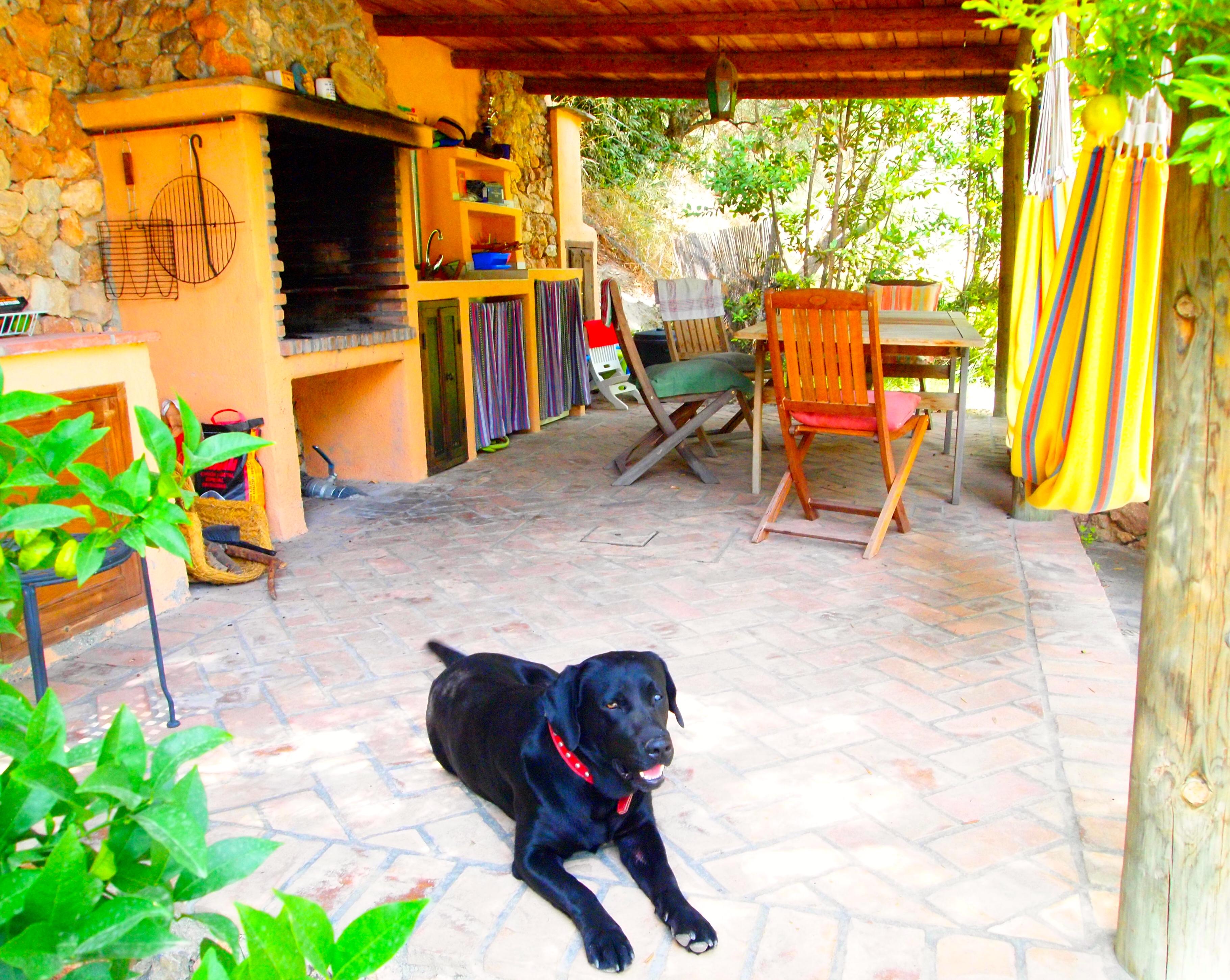 casas_rurales_perros_verano3.jpg