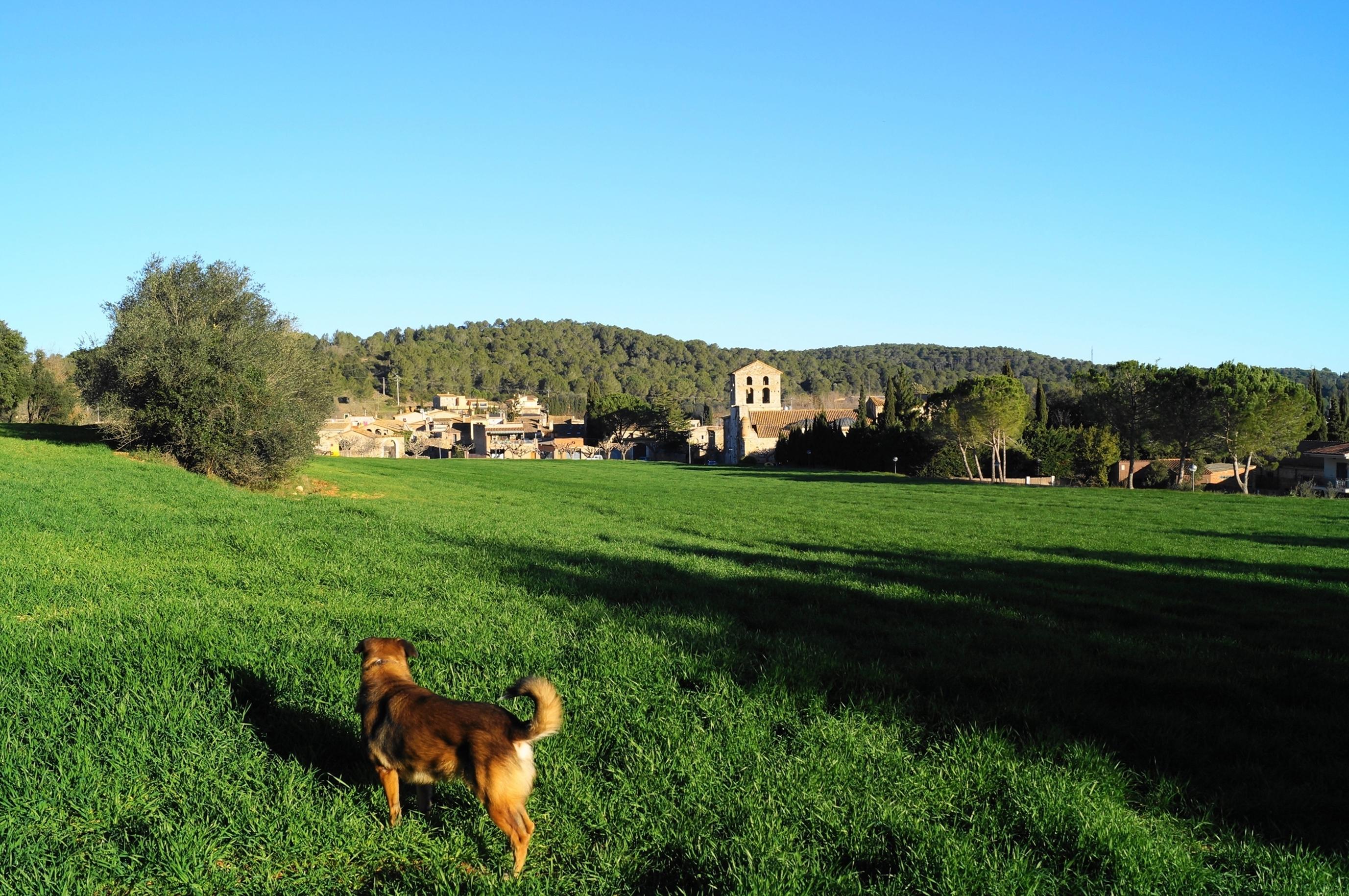 casas_rurales_perros_verano4.jpg