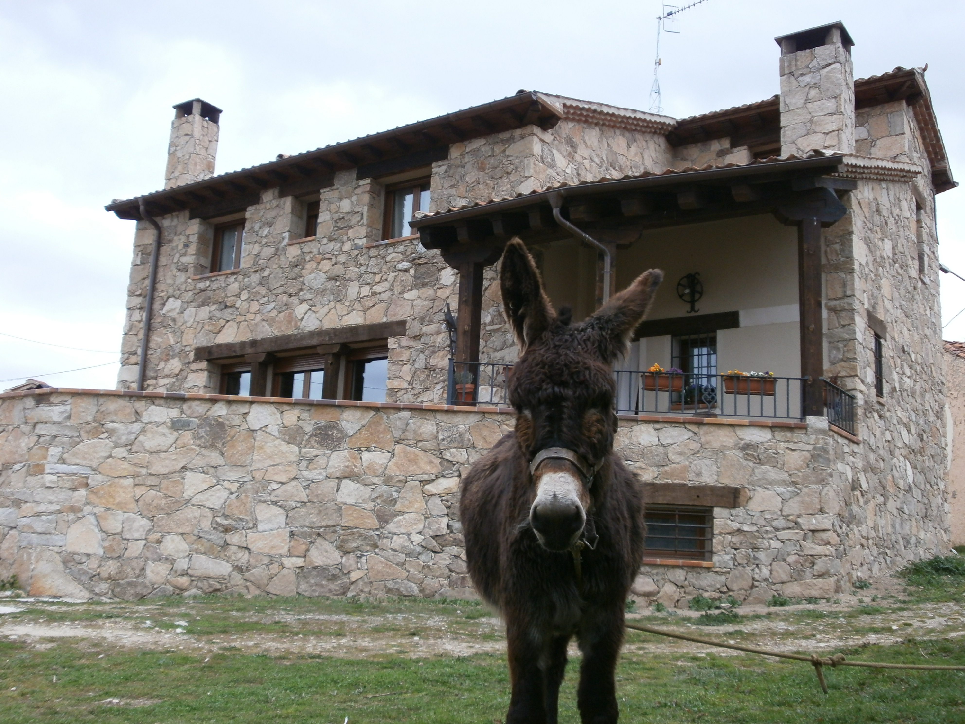 casas_rurales_perros_verano5.jpg
